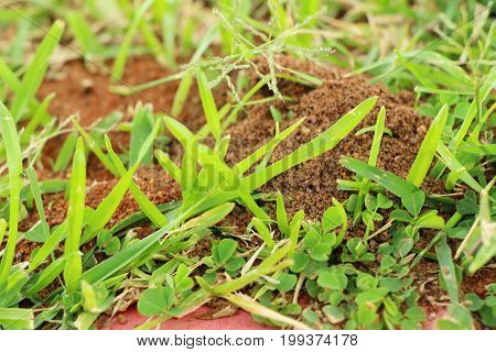 Ants nest with the nature on soil