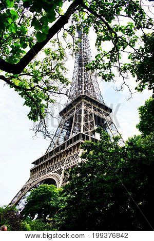 Eiffel Tower amidst a grove of trees in Paris, France.
