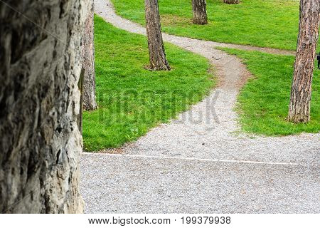 path way with trees and green meadow in summer
