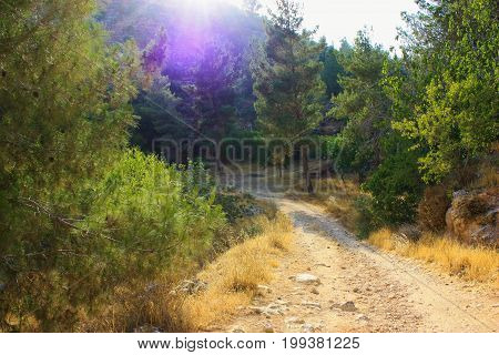 Nature and plants around the countryside of Jerusalem part of The National Trek