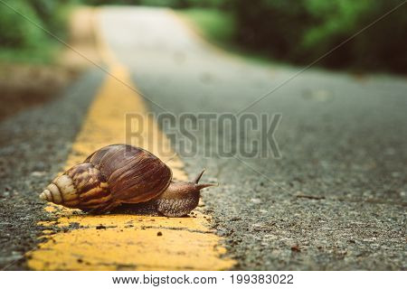 Snail Crosses The Yellow Line On Street,  Business And Finance Concept , Success From Patience ,slow