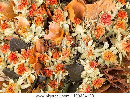 Colorful autumn background of dried flowers and leaves