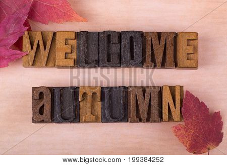 Welcome autumn wood text with autumn leaves