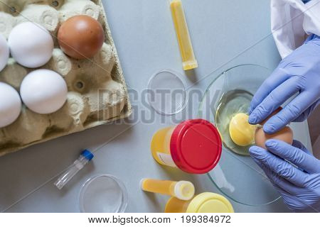 Scientist at laboratory investigates the crisis caused by the fraud of the contaminated eggs with fipronil in Spain