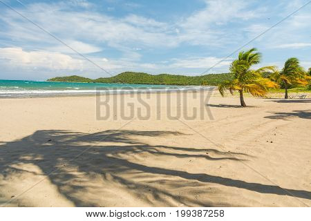 Idyllic sand beach with palm trees. Caribbean Sea. Cuba