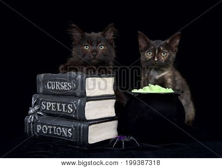 One black and brown and one Tortie kitten sitting on a black surface with pseudo books stacked in front of them next to a cauldron with glowing yellow rock potion looking directly at viewer.