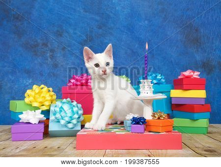 Small white kitten with heterochromia eyes sitting next to a miniature birthday cake on pedestal surrounded by colorful birthday presents looking to viewers right towards burning candle.