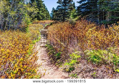 Trail hiking in Bonaventure island by Perce Quebec in Gaspe Gaspesie region with steps going up