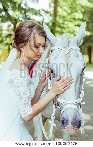 Bride stands in the park near a large white horse. Bride stroking horse. Toned