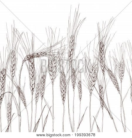 Vector Seamless Horizontal Background With Isolated Ear Of Wheat. Black And White Hand Drawn Sketche