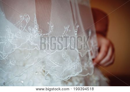 Bride in the wedding dress and veil