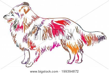 Colorful decorative portrait of standing in profile Sheltie(Shetland Sheepdog) vector isolated illustration on white background poster