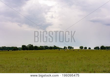 Agricultural background image of a summer pasture right after a storm with cattle in the distance.