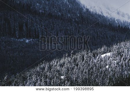 Trees Covered In Snow And Shadow In Winter