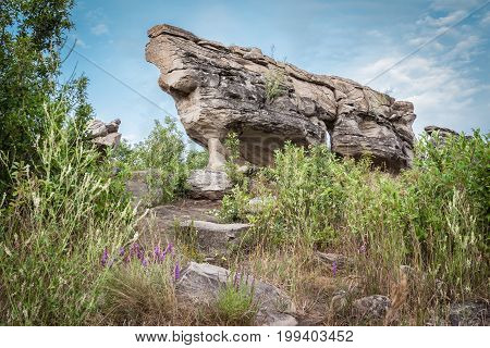 horizontal summer time image of a very large long sandstone rock formation looming over green grass and shrubs with little purple flowers.