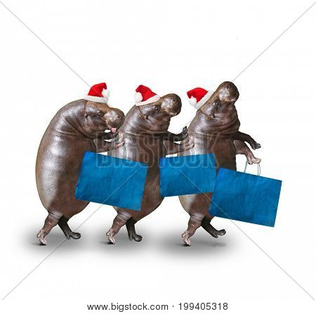 Three hippos going to supermarket in Black Friday for low cost shopping. Funny customers enjoying life. Humorous animals isolated on white background.