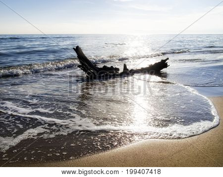 seascape image of dried tree trunk on beach over sunny sky