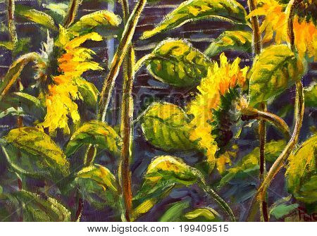 sunflowers. Original oil painting of sunflower flowers. beautiful sunflowers flowers on canvas. Modern Impressionism.