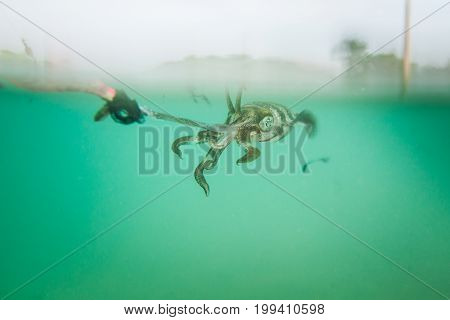 Squid stick the hook with a fishermen.