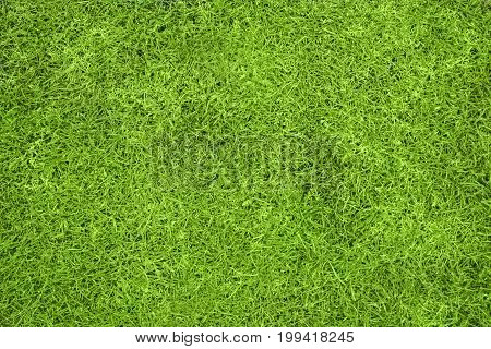 A green grass background viewed from above with copy space