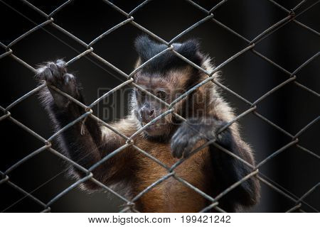 Small Monkeys Were Kept In A Cage In The Zoo
