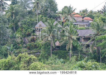 Tropical Jungle Landscape Of Paradise Island Of Bali, Indonesia.