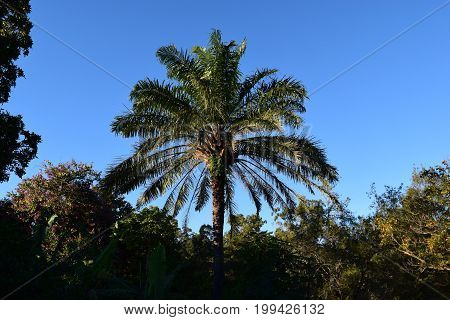 Palm Tree With A Clear Blue Sky In Brisbane