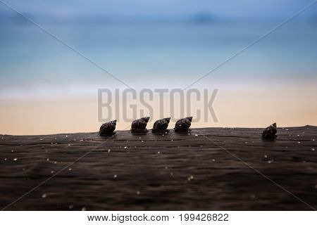 Silhouette of line up Snail group walking on timber on the beach.