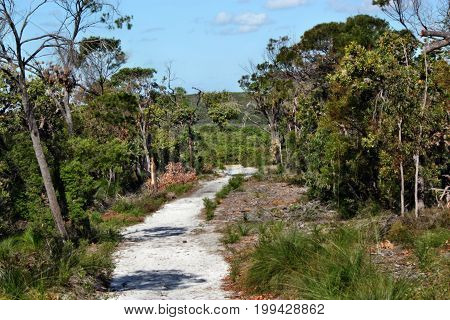 Forest Way At Noosa Heads National Park