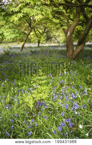 Stunning Vibrant Landscape Image Of Blubell Woods In English Countryside In Spring