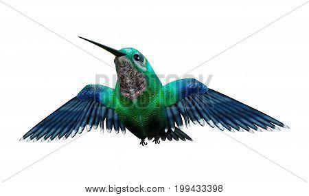 3D Rendering Humming Bird On White