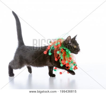 christmas kitten wrapped up in red garland