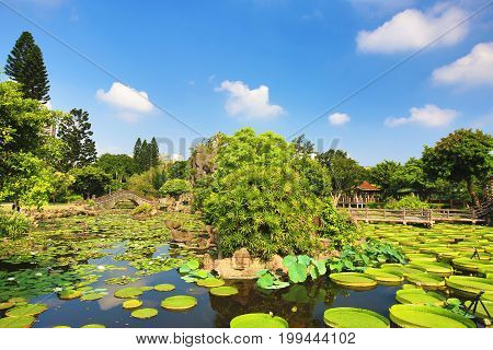 Beautiful garden scenery with lotus flowers,santa cruz waterlily flowers and leaves and aquatic plants in the pond in summer