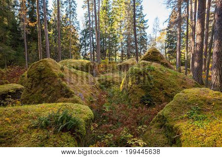Boulders in the forest woods, rocks covered by moss. Autumn season.