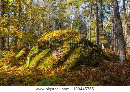 Boulders in the forest woods, rocks covered by moss and colorful foliage. Autumn season.