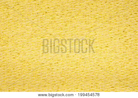 Yellow Sponge Close Up