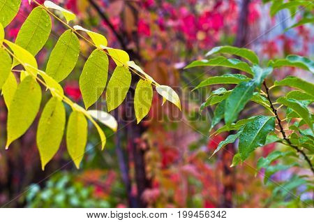 Green, yellow and red foliage and its vivid colors after the rain in Topcider park, Belgrade, Serbia