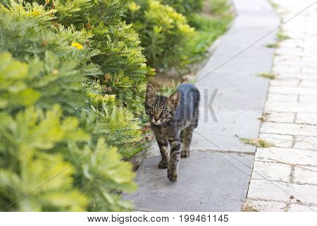 Kitten on the green grass, walking cat