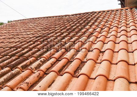 Moldy Roof Tiles In Humid Tropical Climate