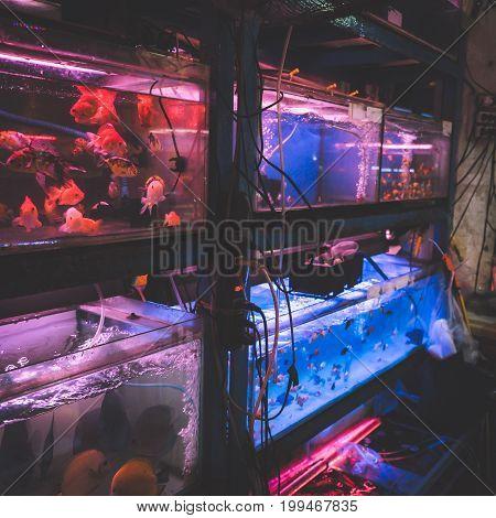 Ornamental Fish in Tank Was selling in Vietnam