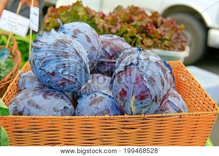 Fresh Organic Purple Cabbage At The Local Farmers' Market.