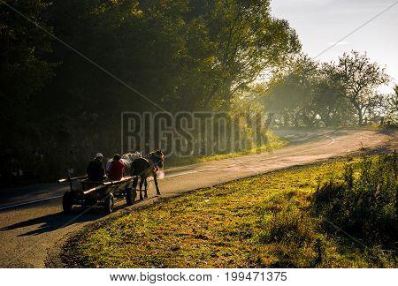 Horse Cart On Serpentine On Foggy Morning