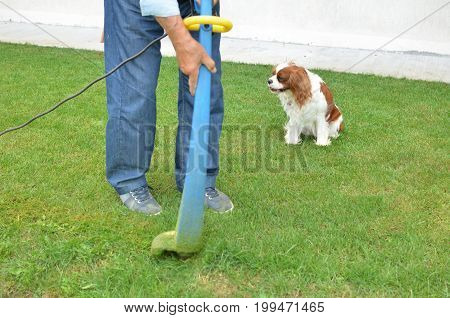 Lawn trimmer in action in a man's hands and a doggy in a background
