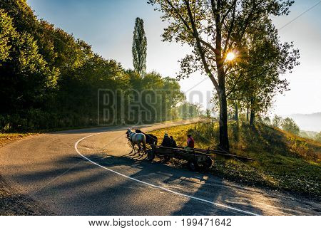 Horse Cart On Serpentine In Countryside Area