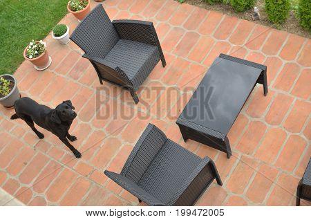 Garden furniture and a dog in a backyard - bird's eye view