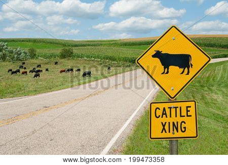 Cattle Crossing Sign: Motorists in southern Wisconsin are advised to watch for cattle on the road.   :  Motorists in southern Wisconsin are advised to watch for cattle on the road.