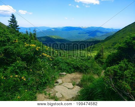 Peaceful green mountains covered of grass and trees under the clear blue sky