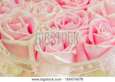 Pink rose in a vase In the living room