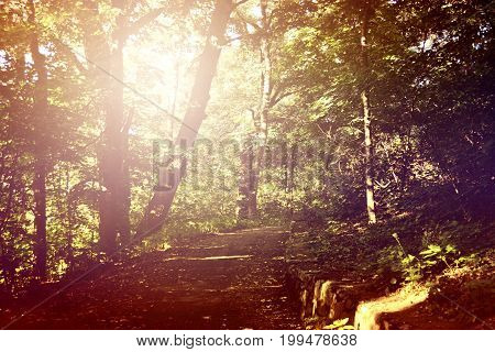 Path in leafy green forest with glare patch of reflected light in the summer day. Copy space. Natural background. Environment, ecology