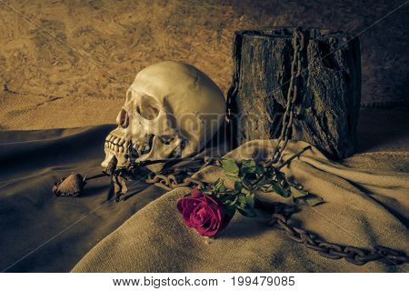 Still life with a human skull with a red rose in a vase beside the timber and chains.